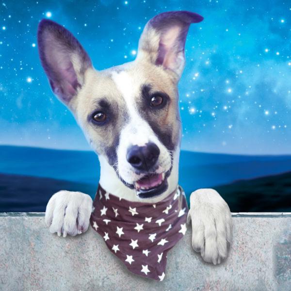 Plakát Gump – Pes, který naučil lidi žít